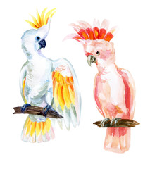 watercolor Australian Cockatoo