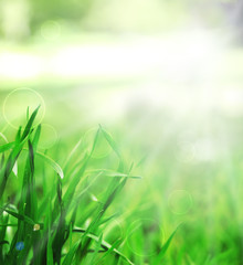 Spring or summer season abstract nature background with green grass