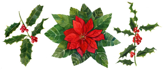 Watercolor drawings of holly and Christmas flower, holiday set