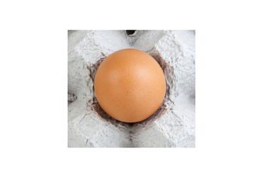 Egg single panel
