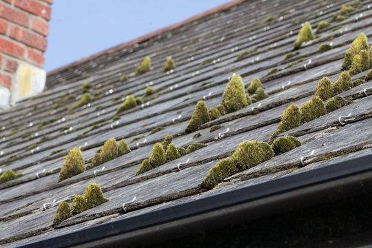 Moss growing on a slate roof