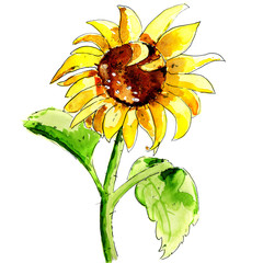 Illustration of sun flower