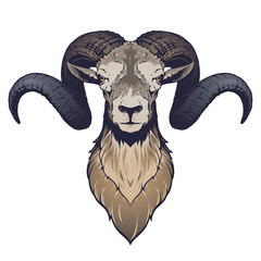 Ram head illustration