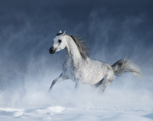 Printed roller blinds Artist KB Purebred grey arabian horse galloping during a blizzard