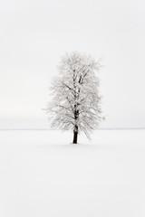 lonely tree .  snow.