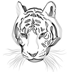 Original artwork tiger with dark stripes, isolated on white background, and sepia color version, llustration