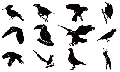 Kinds of Bird Complete Silhouette Set