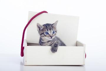 Gatito saliendo de caja de regalo