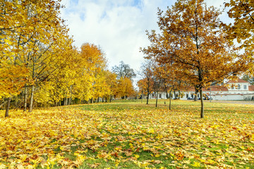 The fallen yellow leaves from trees
