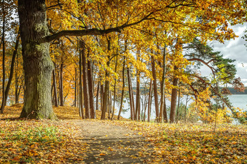 Yellow leaves in forest