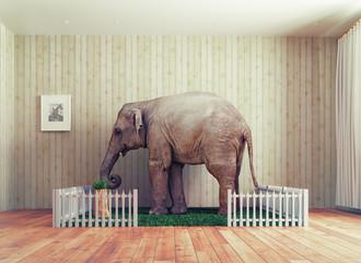 Elephant calf - pet