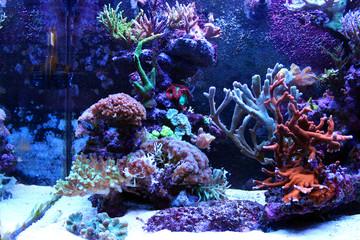 Coral reef aquarium scene