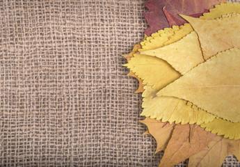 Autumn leaves on sackcloth.
