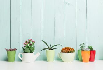 House plants, succulents