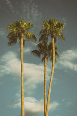 Palm Trees, Los Angeles, CA,USA