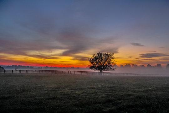 Kentucky Bluegrass Horse Farm Sunrise in Lexington KY