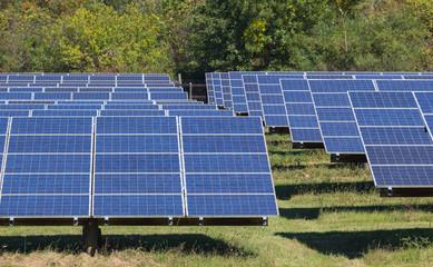 Solar panel array under the intense sunlight of North Carolina. Fotoväggar