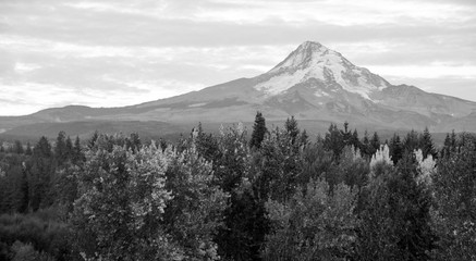 Wall Mural - Mt. Hood Volcanic Mountain Cascade Range Oregon Territory