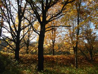 Herbst  in der Leineaue