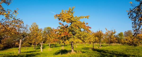 Herbstlandschaft, farbige Blätter an den Bäumen