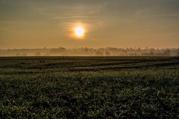 morgendlicher Nebel auf dem Land