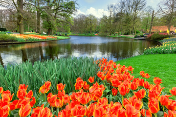 Fototapete - Tulips in Keukenhof Garden, Netherlands.