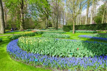 Fototapete - Spring Flowers in Keukenhof, Lisse, Netherlands.