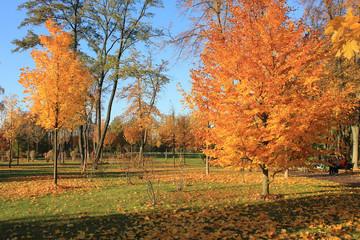 yellow bright autumn park