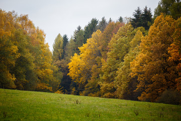 Majestic landscape with autumn leaves in forest.