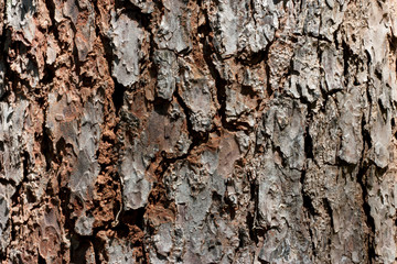 Bark of Elm. Seamless Tileable Texture