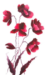 Modern art of red poppy flowers, watercolor illustrator