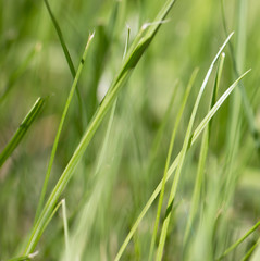 green grass as a background