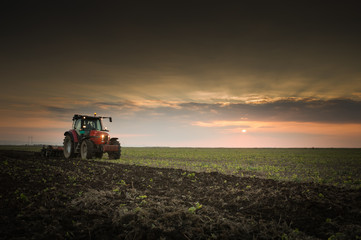 Wall Mural - Tractor plowing a field