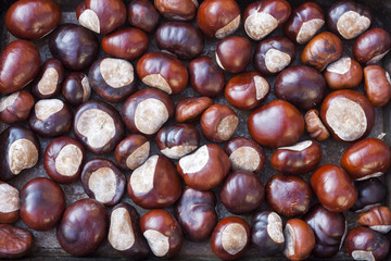 Rich brown autumn conkers from a horse chestnut tree as an abstract background texture