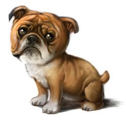 Cria de Bulldog