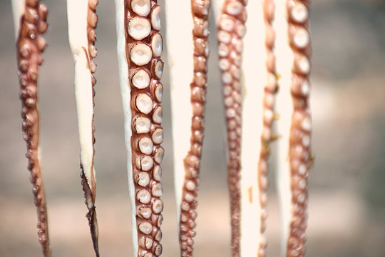 Close-up of octopus  tentacles hanging