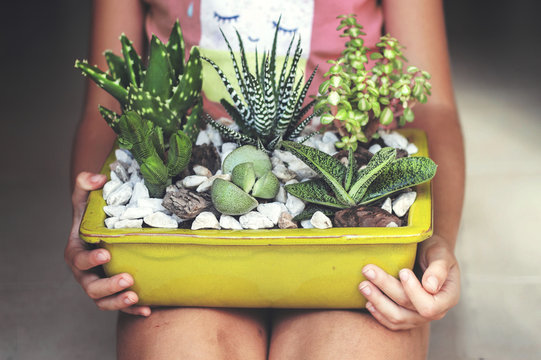 Girl sitting, holding a display of succulent plants