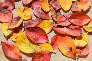 落ち葉のテクスチャ/「紅葉イメージ」や「秋イメージ」等の背景用素材として使用できる写真です。