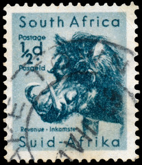 Stamp printed in South Africa shows a desert wartho
