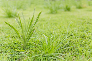 Closeup green grass on the field