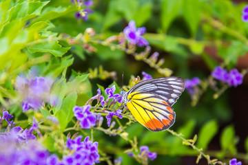 butterfly on flower -Blur flower background