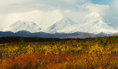 Wall Mural - Plants Ground Cover Change Color Alaska Mountains Autumn Season