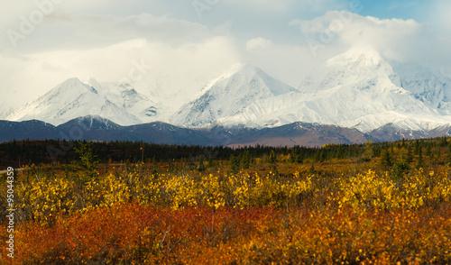 Wall mural Plants Ground Cover Change Color Alaska Mountains Autumn Season