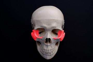 Zygomatic Bone