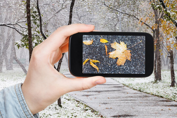picture of fallen leaves in snow in urban park