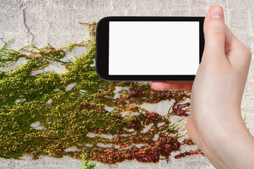 phone with cut out screen and ivy plant on wall