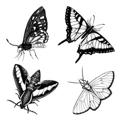 Vintage collection of black ink hand drawn butterflies.