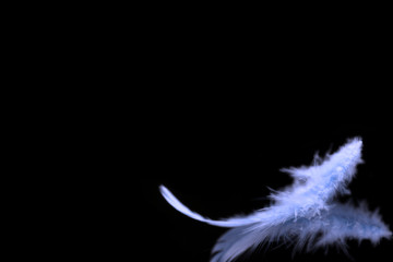 Blurred blue feather background