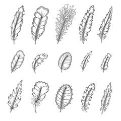 Hand drawn vintage feathers set. Pen graphic vector illustration