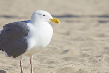 Seagull Sandy Beach